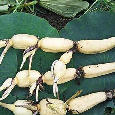 10pcs/Bag Bowl Lotus Water Lily Rare Aquatic Flower Perennial Plant Bonsai for Home Garden : Garden & Outdoor