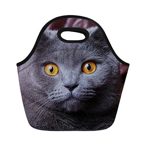 - Sannovo Insulated Lunch Box Animal British Shorthair Cat Print Gourmet Handbag
