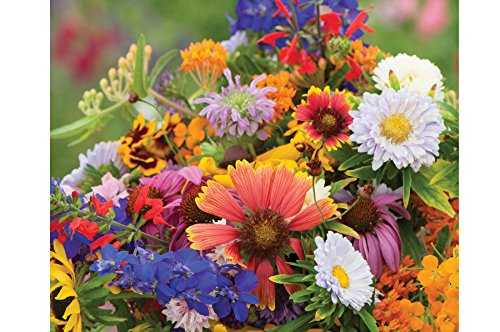 Grow Purple Coneflower - David's Garden Seeds Wildflower Butterfly Hummingbird Mix SS3062 (Multi) 500 Non-GMO, Open Pollinated Seeds
