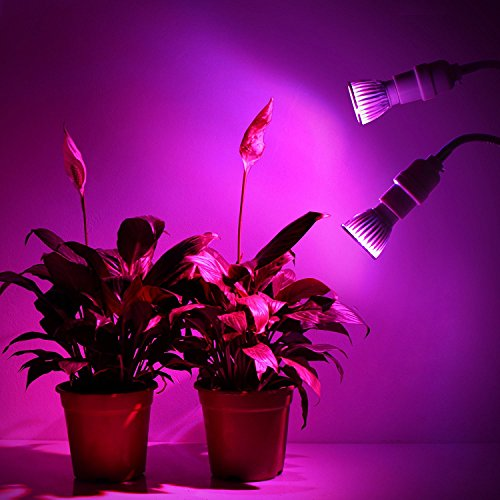 Roleadro Dual-head LED Grow Light, 10W Detachable High-end Grow Lamp Bulbs Desk Clip Plant Grow Light,360 Degree Adjustable Gooseneck,Double on/off Switch,for Indoor Hydroponic Plant Office Greenhouse by Roleadro (Image #3)
