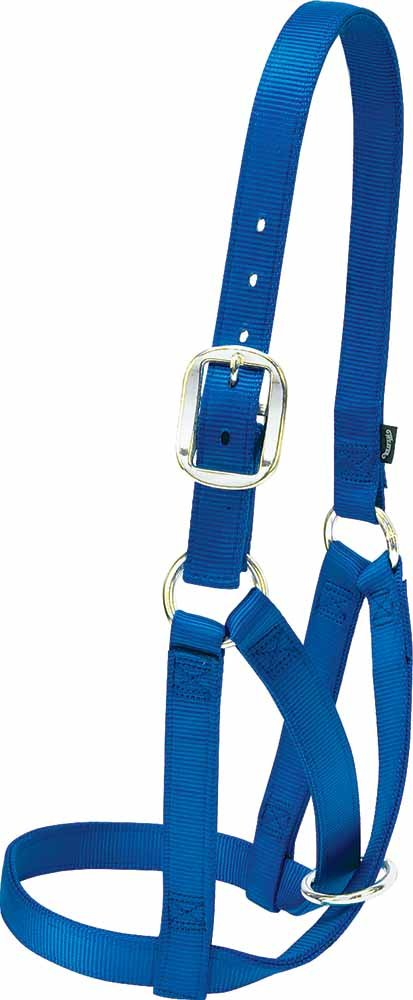 Weaver Leather Barn Cow Halter, bluee, Small