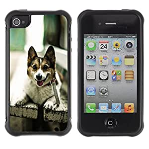 iDesign Rugged Armor Slim Protection Case Cover - Funny Friendly Dog On A Bench - Apple Iphone 4 / 4S