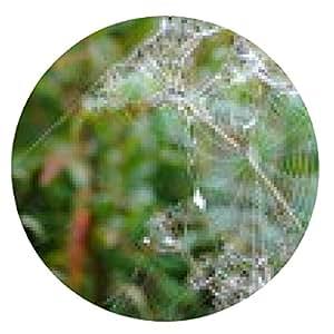 alfombrilla de ratón tela de araña con gotas de rocío - ronda - 20cm