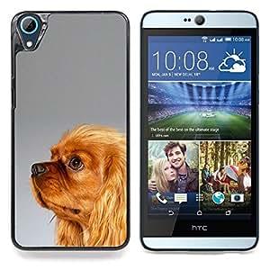 """Yorkshire Terrier de Oro Piel Marrón"""" - Metal de aluminio y de plástico duro Caja del teléfono - Negro - HTC Desire 626 626w 626d 626g 626G dual sim"""