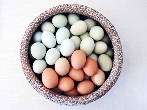 Hand Blown Free Range Chicken Easter Eggs   Light Mix - Blue, Green, Brown,   Primitive, Natural Rustic Farmhouse, Cottage Chic Décor, Wedding Baptism Decor, One Dozen (12) Egg