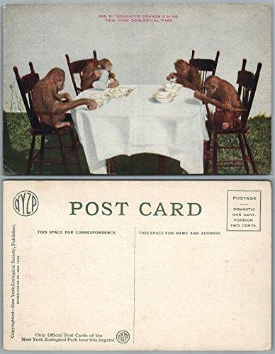 NEW YORK ZOO N.Y. ANTIQUE POSTCARD EDUCATED ORANGS DINING MONKEYS
