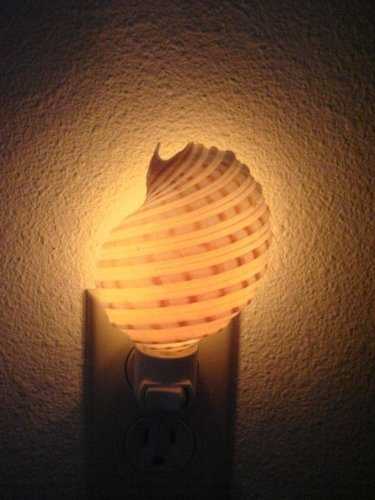 Spotted Banded Tun Sea Shell Nightlight Bathroom Kitchen