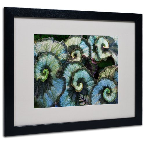 Escargot Begonia Matted Framed Art by Kurt Shaffer in Black Frame 16 by 20Inch