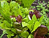 David's Garden Seeds Lettuce Mix Rocky Top (Multi) 200 Non-GMO, Heirloom Seeds