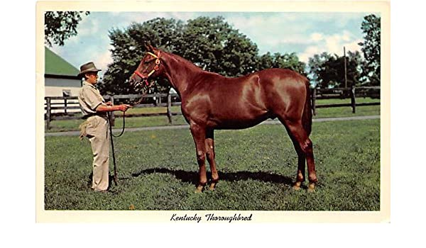 Kentucky Thoroughbred, Yearling Ready for sale Lexington, Kentucky
