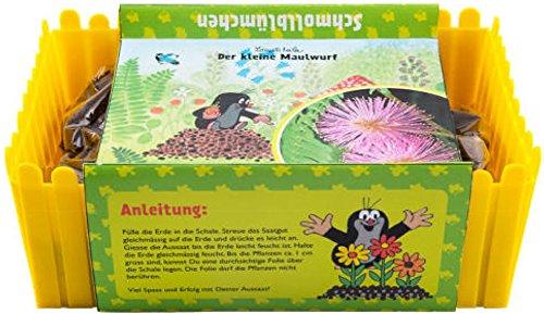 Mein Minigarten 'Der kleine Maulwurf' - Schmollblume