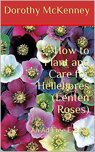 How To Plant And Care For Hellebores Lenten Roses An Ad Free E