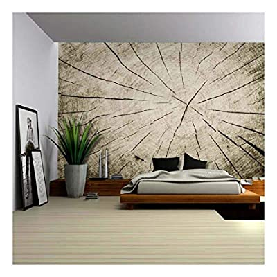 Made For You, Incredible Craft, Up Close Portrait of The Wrinkles and Cracks Inside of a Tree Trunk Wall Mural