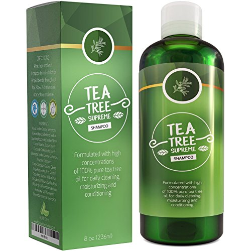 Beauty : Sulfate Free Tea Tree Shampoo Dandruff Treatment for Women & Men with Pure Rosemary + Jojoba Oils - Healthy Scalp Cleanser for Colored Dry + Oily + Thick + Fine Natural Hair Care for Silky Soft Hair