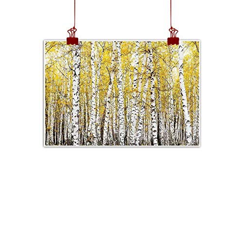 (Simple Life Minimalist Farm House Decor,Autumn Birch Forest Golden Leaves Woodland October Seasonal Nature Picture,Yellow Grey 24