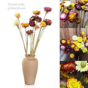 10PCS Artificial Dried Daisy, Floral Decor Bouquet,Colorful Chrysanthemum Arrangement,Bouquet Bride Bridesmaid Holding Flowers for Home Hotel Office Wedding Party Garden Craft Art Decor 1