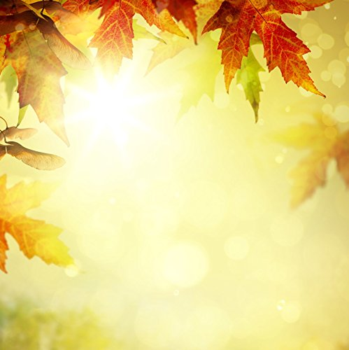 Yeele Leaves Backdrops 9 x 9ft/2.7 X 2.7 M Hazy Maple Leaf Sunset Sunshine Sunrise画像大人用芸術的肖像写真の撮影小道具写真撮影背景   B07FB4MJQ9