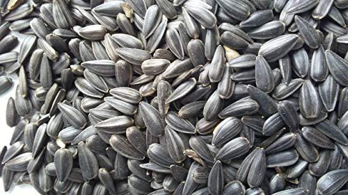 1 Lb. Sunflower Seeds, Black Oiled Sunflower Seeds, Backyard Bird Seed Feed