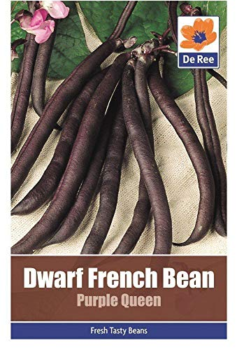 2 Packs of Dwarf French Bean Purple Queen Vegetable Garden Seeds