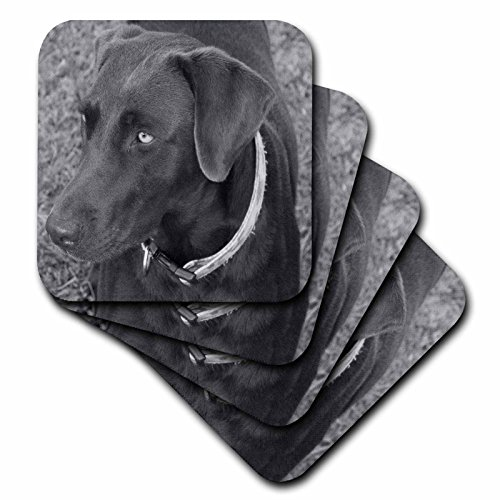 3dRose CST_14144_2 Chocolate Lab Black and White-Soft Coasters, Set of 8