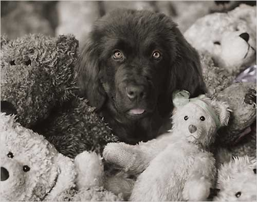 Dog with Teddies by Rachael Hale Poster Print, 19.75x15.75