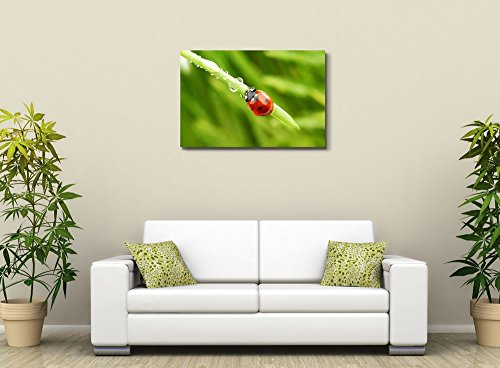 Ladybug on Grass and Water Drops Wall Decor