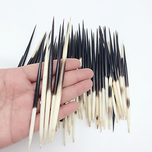 PEPPERLONELY 10PC South Africa Porcupine Quills (4 Inch ~ 6 (Porcupine Quill)