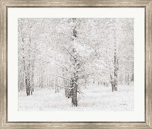 Snow Covered Cottonwood Trees by Alan Majchrowicz Framed Art Print Wall Picture, Silver Scoop Frame, 36 x 30 ()