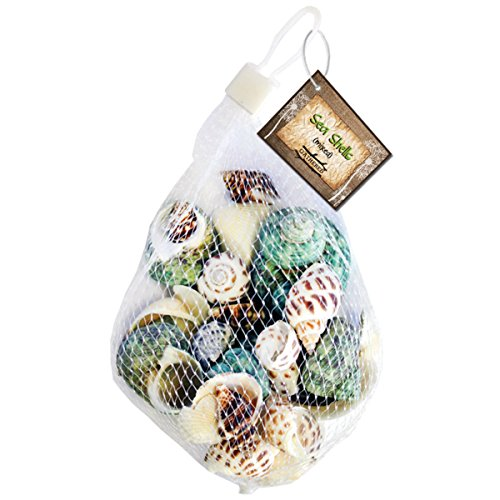 - Gathered, by BCI Crafts Sea Shell, Mixed