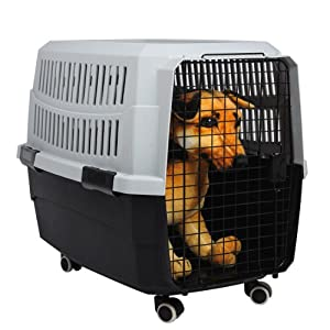 Amazon Com Favorite 174 32 Inch By 22 Inch By 23 Inch Portable Airline Approved Dog Crate Pet