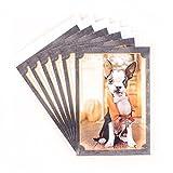 Hallmark Halloween Card Assortment (6 cards, 6 envelopes Dog in Vampire Costume)
