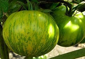 Seeds Tomato Zebra Zelenaya - Green Zebra Organic Heirloom Variety