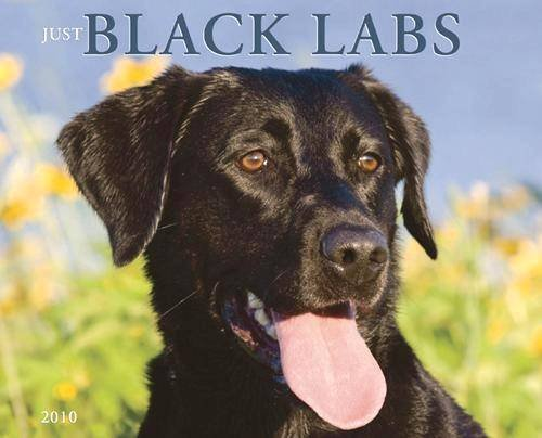 - Just Black Labs 2010 Wall Calendar