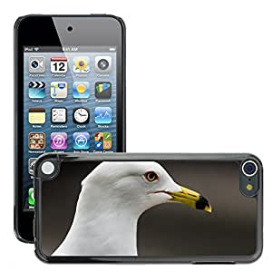 Hot Style Cell Phone PC Hard Case Cover // M00047587 animalplanet chicago animals nikon // Apple iPod Touch 5 5G 5th