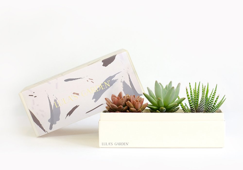 Live Succulent Plant - Signature Garden Centerpiece and Gift Box - Perfect and Unique Gift for Wife, Mom, Friend, Co-Workers, Boss or Teacher (Jewel Garden, Lula's Garden)