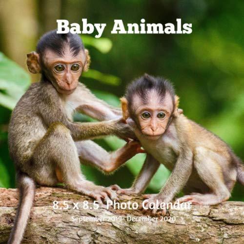Baby Animals 8.5 X  8.5 Calendar September 2019 -December 2020: Monthly Calendar with U.S./UK/ Canadian/Christian/Jewish/Muslim Holidays-Horses Animal Nature