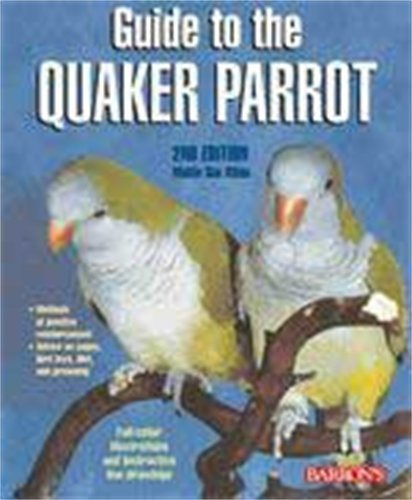 Quaker Parakeet - Guide to the Quaker Parrot