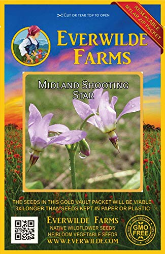 (Everwilde Farms - 300 Midland Shooting Star Native Wildflower Seeds - Gold Vault Jumbo Seed Packet)