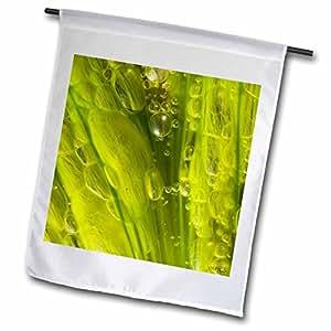 VWPics Spanish Nature - Colonial Green Algae - 12 x 18 inch Garden Flag (fl_46083_1)
