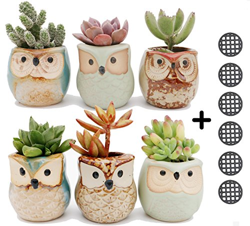 6pcs Owl Pot 2.5 Inch Succulent Plant Pot Mini Ceramic Flower Cactus Container Small Bonsai Pots with Hole and Hole Mesh (Flowers Container Gardens)