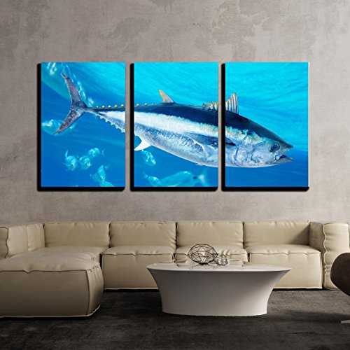 Tuna Bluefin (wall26-3 Piece Canvas Wall Art - Bluefin Tuna Thunnus Thynnus Saltwater Fish in Mediterranean - Modern Home Decor Stretched and Framed Ready to Hang - 16