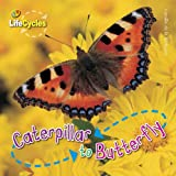 Caterpillar to Butterfly (Lifecycles) (Qed Lifecycles)