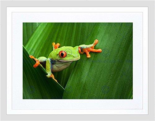 Frog Photo Frame (RED EYED TREE FROG CLIMBING LEAF BLACK FRAME FRAMED ART PRINT PICTURE B12X8614)