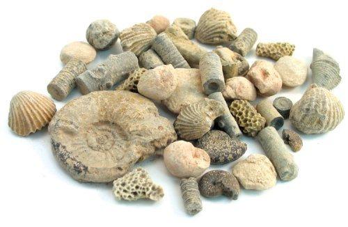 (Fossil Sorting Kit 2 lbs)