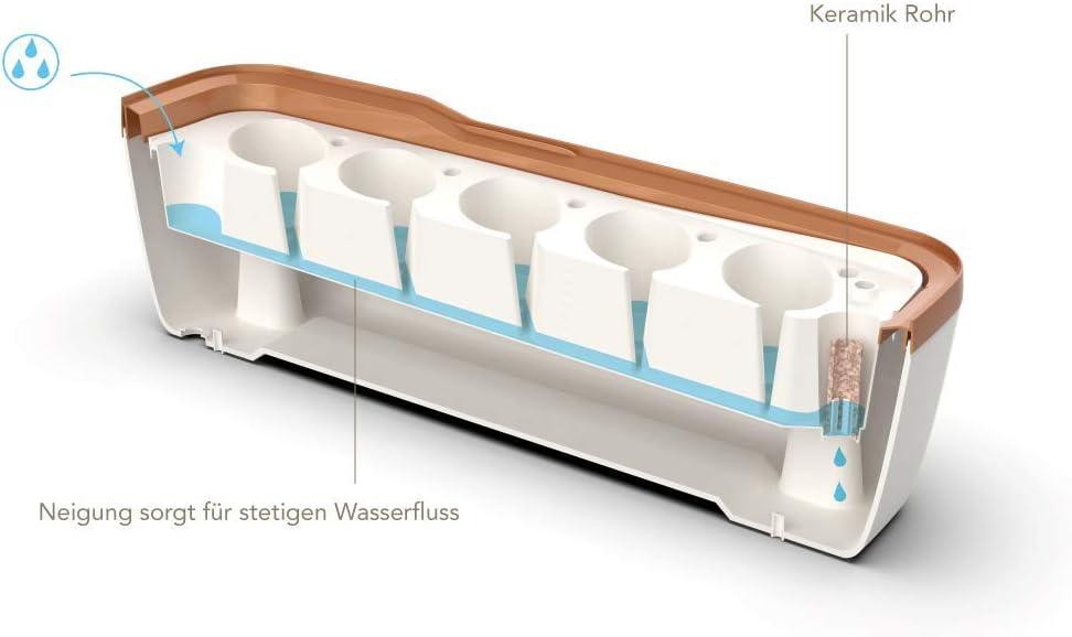 Romberg Style BoQube Gew/ächshaus /& Pflanzkasten-System 41x17x23cm Creme//kupfergold