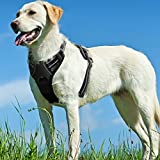 Black Dog Harnesses Escape Proof Harness for Puppy Pet Large