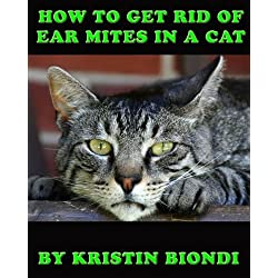 How To Get Rid Of Ear Mites In A Cat