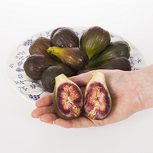 YouGarden Fig Brown Turkey Plant Standard