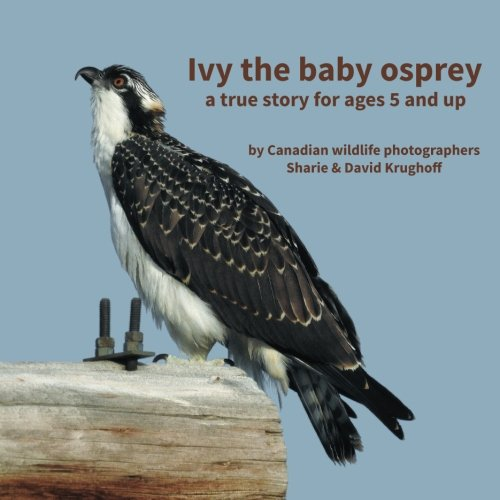Ivy the baby osprey: a true story for ages 5 and up
