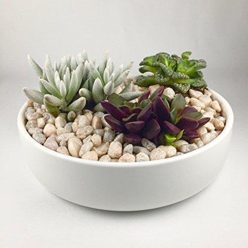 Maikai Products Shallow 6'' Round White Ceramic Succulent Pot. Perfect (Green Round Planter)